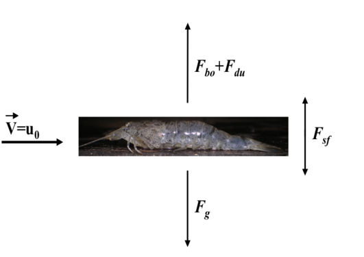 Small scale physical forcing on planktonic organisms