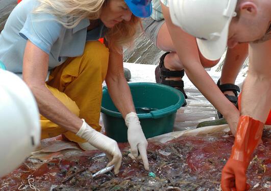 Forsker sorterer fiskene etter en trål