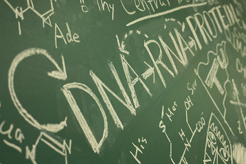 Capitalization of Academic Degrees - Grammar & Punctuation | The